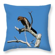 Boat Tailed Grackle Throw Pillow