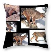 Bob Cat Throw Pillow