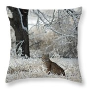 Bobcat And Heavy Frost Throw Pillow