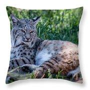 Bobcat In The Grass 2 Throw Pillow