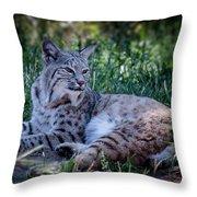 Bobcat In The Grass Throw Pillow