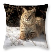 Bobcat In The Snow. Throw Pillow