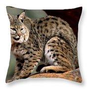 Bobcat Just Relaxin' Throw Pillow