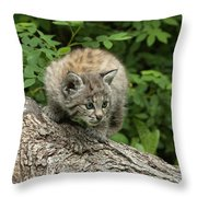 Bobcat Kitten Exploration Throw Pillow by Sandra Bronstein