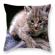 Bobcat Kitten Throw Pillow