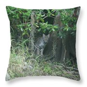 Bobcat In The Everglades Throw Pillow