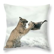 Bobcat Lynx Rufus Capturing Muskrat Throw Pillow
