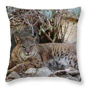Bobcat Resting Throw Pillow