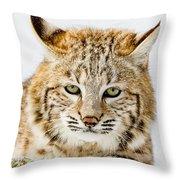 Bobcat Stare Throw Pillow
