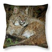 Bobcat Warming In The Autumn Sun Throw Pillow