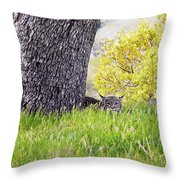 Bobcat Watch Throw Pillow