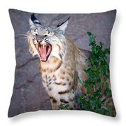 Bobcat Yawn Throw Pillow
