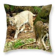 Bobcats Begin To Hunt Throw Pillow