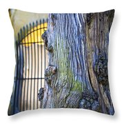 Boboli Garden Ancient Tree Throw Pillow