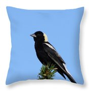Bobolink Throw Pillow