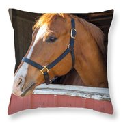 Bode 15068 Throw Pillow