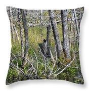 Bog Shell Throw Pillow