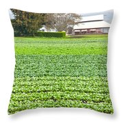 Bok Choy Field And Farm Throw Pillow