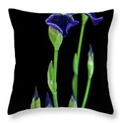 Boldness Throw Pillow by Michael Peychich
