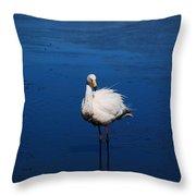 Bolivia Flamingos Throw Pillow