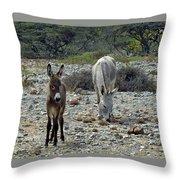 Bonaire Wild Donkeys 2 Throw Pillow