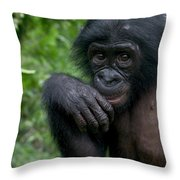 Bonobo Pan Paniscus Juvenile Orphan Throw Pillow