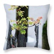 Bonsai Mountain-ash Throw Pillow