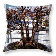 Bonsia Tree Garden Throw Pillow