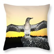 Booby At Sunset Throw Pillow