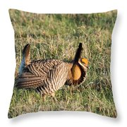Booming Greater Prairie Chicken 5 Throw Pillow