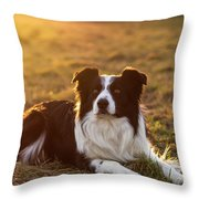 Border Collie At Sunset With Warm Colors Throw Pillow