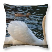 Boston Public Garden Swan Amongst The Ducks Ruffled Feathers Throw Pillow