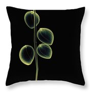 Botanical Study 2 Throw Pillow by Brian Drake - Printscapes