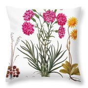 Botany: Flowers, 1613 Throw Pillow