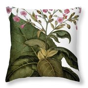 Botany: Tobacco Plant Throw Pillow