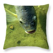 Botox Throw Pillow