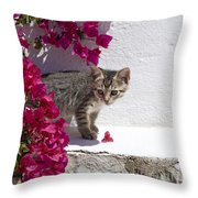 Bougainvillaea Tabby Throw Pillow