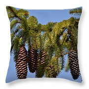 Boughs Of Pine Cones Throw Pillow