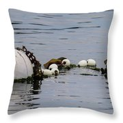 Bouyed Sea Otter  Throw Pillow