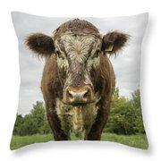 Bovine Beauty 1 Throw Pillow