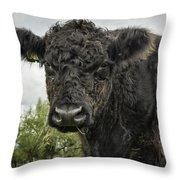 Bovine Beauty 2 Throw Pillow