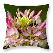 Bowl Of Beauty Throw Pillow