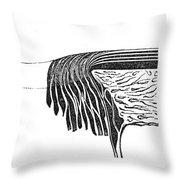 Bowmans Membrane, Retinal Layers, 1842 Throw Pillow