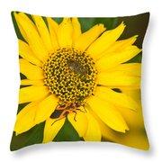 Box Elder Bug On False Sunflower Throw Pillow