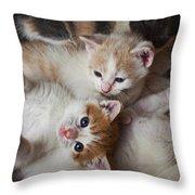 Box Full Of Kittens Throw Pillow by Garry Gay
