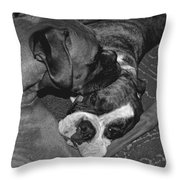 Boxer Buddies Throw Pillow