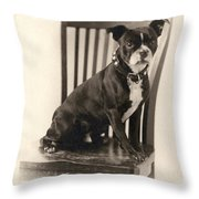 Boxer Sitting On A Chair Throw Pillow