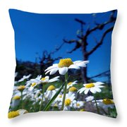 Br0078 Throw Pillow