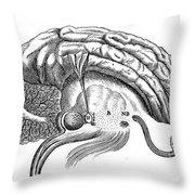 Brain And Eye, Descartes, Illustration Throw Pillow