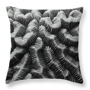 Brain Coral Details Throw Pillow